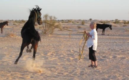 Hästhantering
